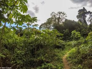 Stožár filmařů z BBC u hnízda harpyjí v Sierra Imataca (Mart Eslem)
