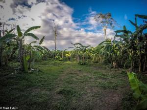 Banánová plantáž v Sierra Imataca (Mart Eslem)