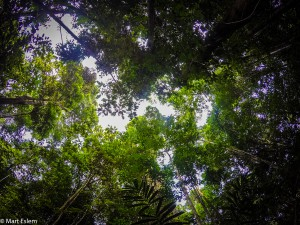Domov harpyje pralesní v Sierra Imataca (Mart Eslem)