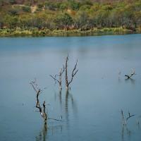 Suché stromy ve vodě, JAR [Mart Eslem]