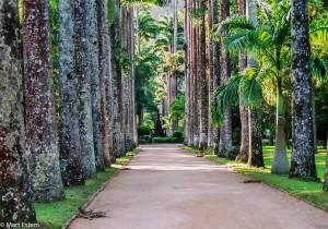 Palmový háj vysázený v den založení zahrady(Mart Eslem)