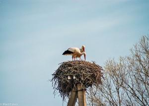 Čapí hnízda jsou symbolem Pobaltí (Mart Eslem)