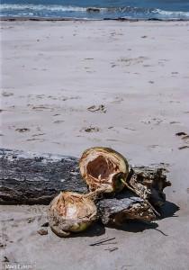 Můj první kokosák (Mart Eslem)