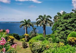 Rozkvetlý karibský ráj ostrova Tobago (Mart Eslem)