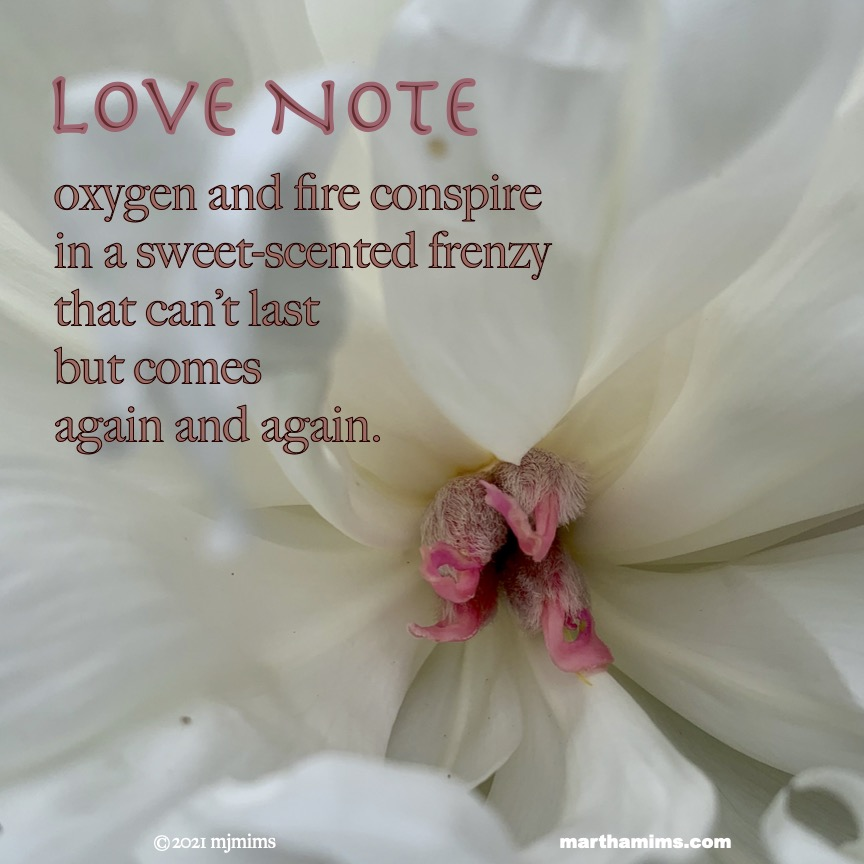 Love Note oxygen and fire conspire  in a sweet-scented frenzy  that can't last  but comes  again and again.