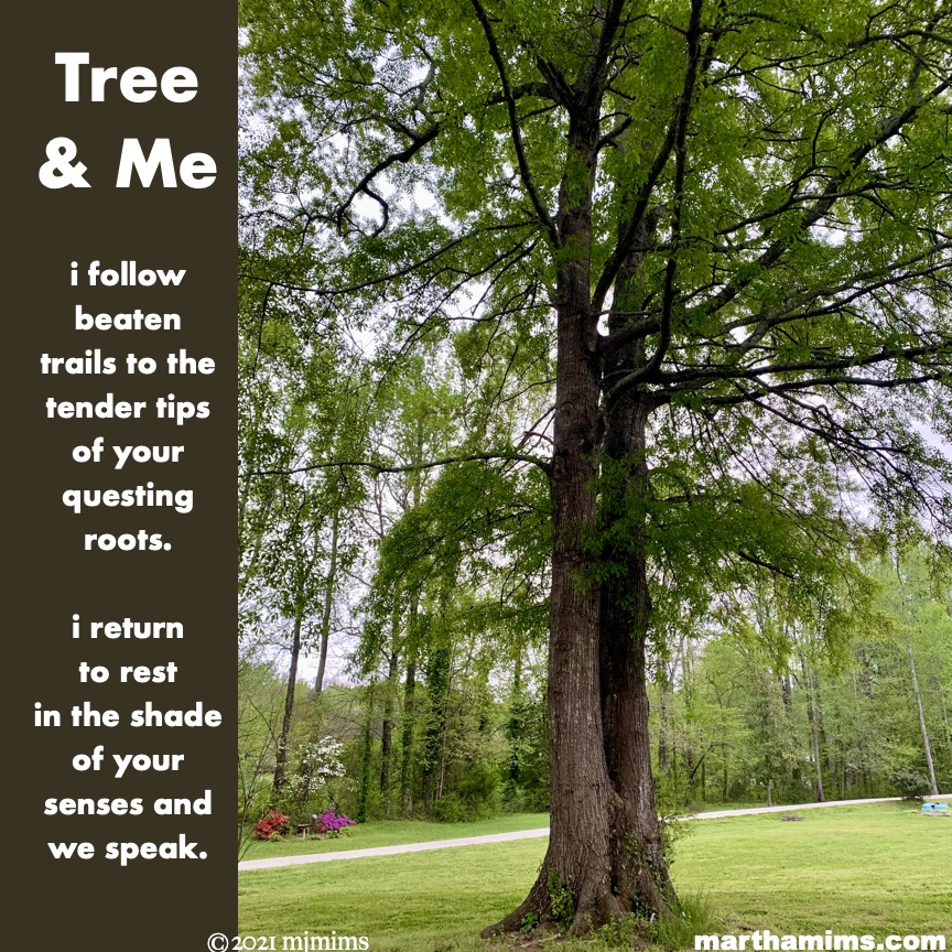Tree & Me  i follow beaten trails to the tender tips of your questing roots.  i return to rest in the shade of your senses and we speak.