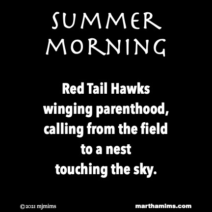 Summer Morning  Red Tail Hawks winging parenthood, calling from the field to a nest touching the sky.