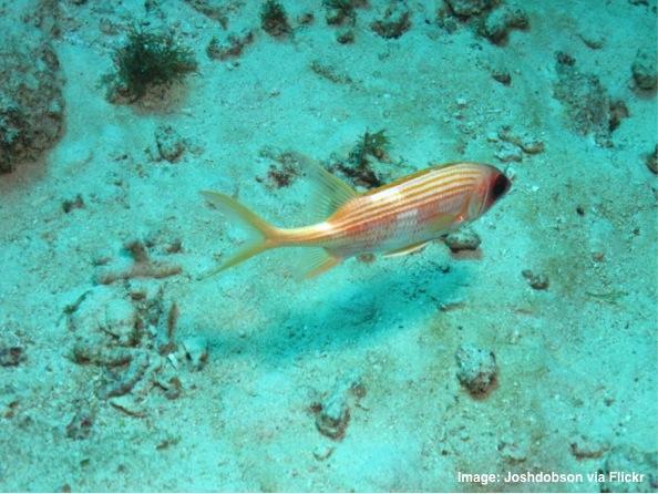 Underwater Antigua
