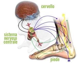 Il sistema propriocettivo