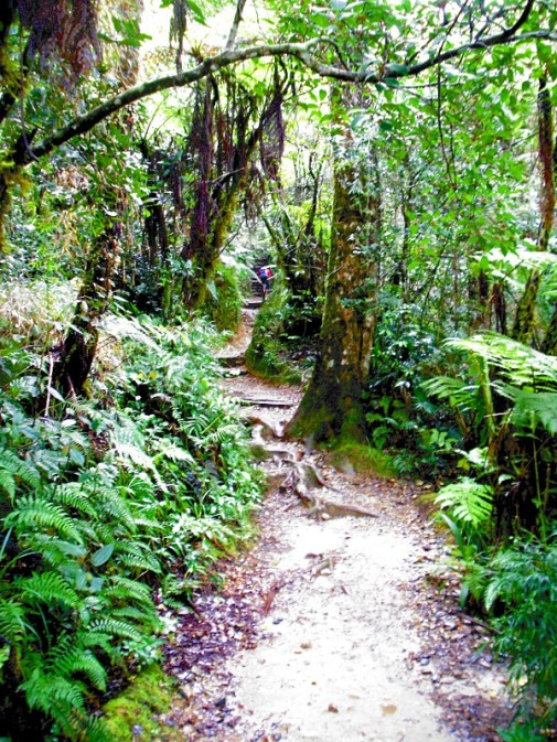 Beautiful jungle trail on Kinabalu