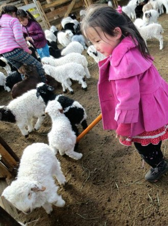 Our hosts' grandkids playing with the newborn lambs and kids - so cute!