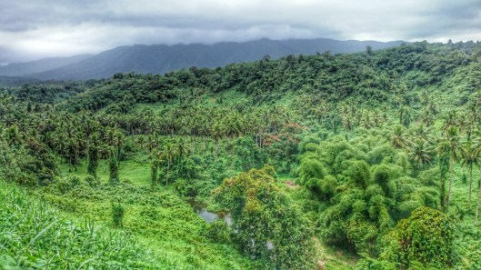 Taveuni is such a green place...