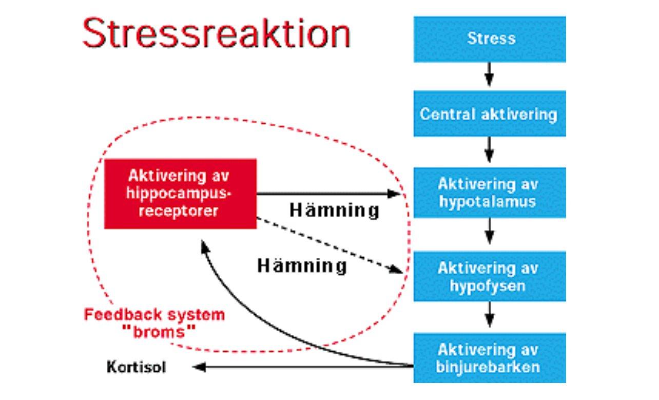 stressade binjurar symtom