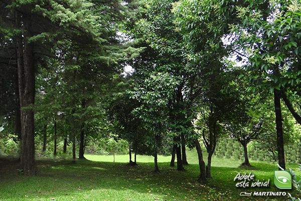 verde-martinato-reserva-florestal