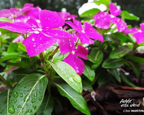 verde-martinato34jpg