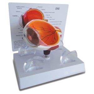 lm-301e-olho-humano-cornea-martinato