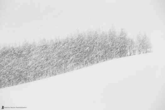 Biei Trees in Snow Storm