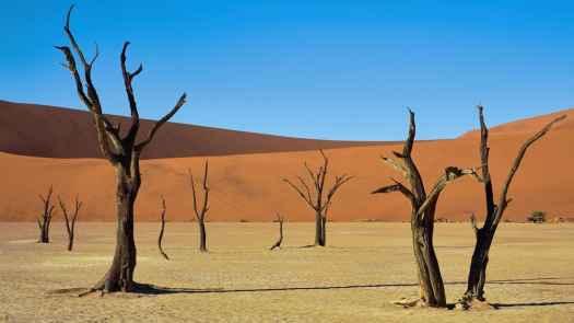 Deadvlei Camelthorn Trees