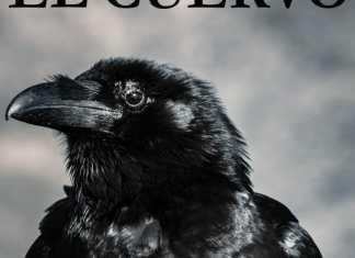 El Cuervo, de E.A. Poe