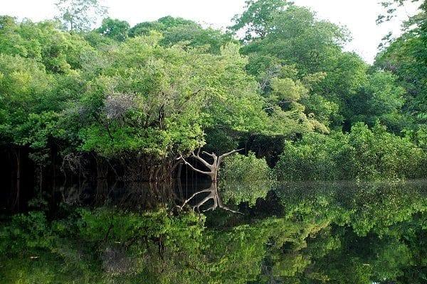 Orilla del río Negro (Amazonas), al oeste de la ciudad de Manaos.