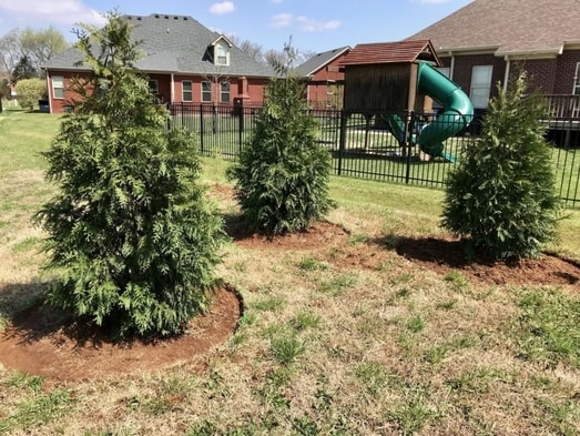 Three trees planted beside a playground - Landscape Design - Martin's Home & Garden - Murfreesboro, TN