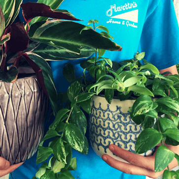 Employee holding potted plants