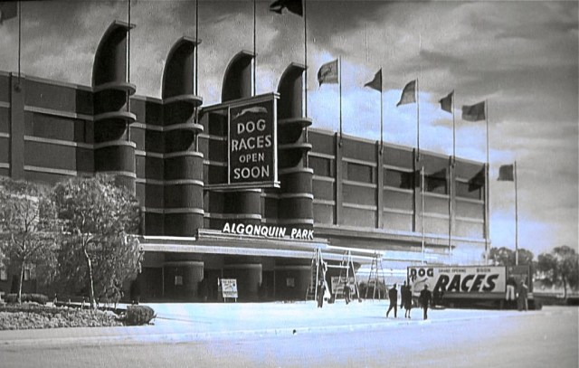 "Pan Pacific Auditorium as the Algonquin Dog Park in MGM's ""Johnny Eager"" (1941)"