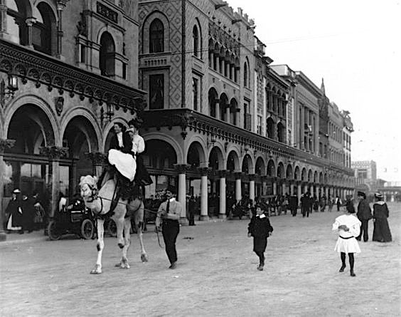 Camel riding in Venice, California, 1906
