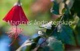 Martinus-norge