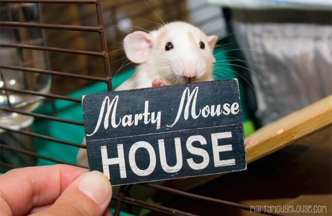 www.martymousehouse.com