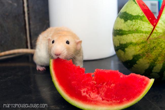 wimbley_waltermelon