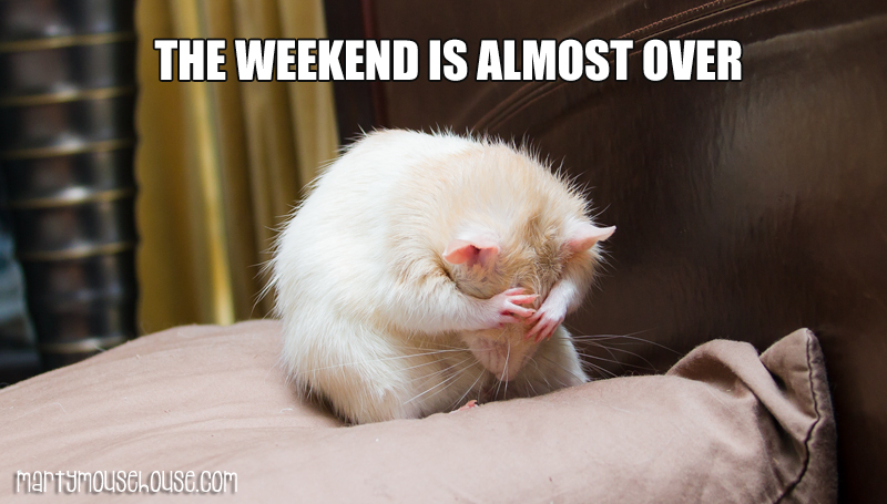 Weekend is Almost Over – Marty Mouse House