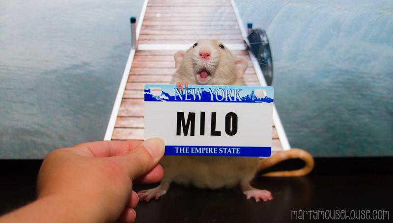 mil_NY2