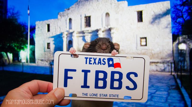 Fibbs_texas