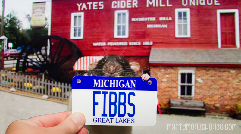MI_fibbs