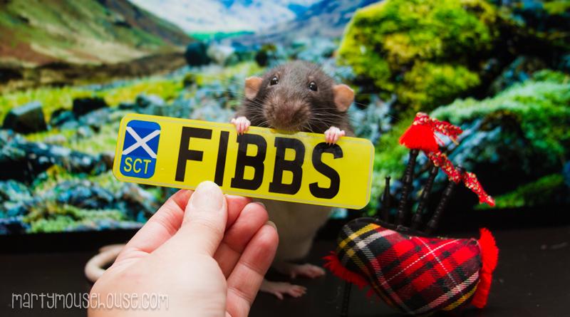 fibbs_scotland