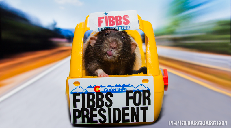 CO_Fibbs