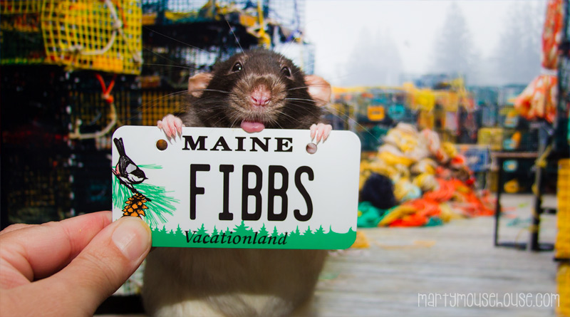 ME_fibbs