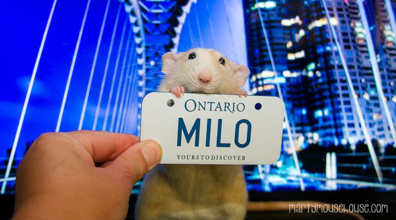 ON_milo