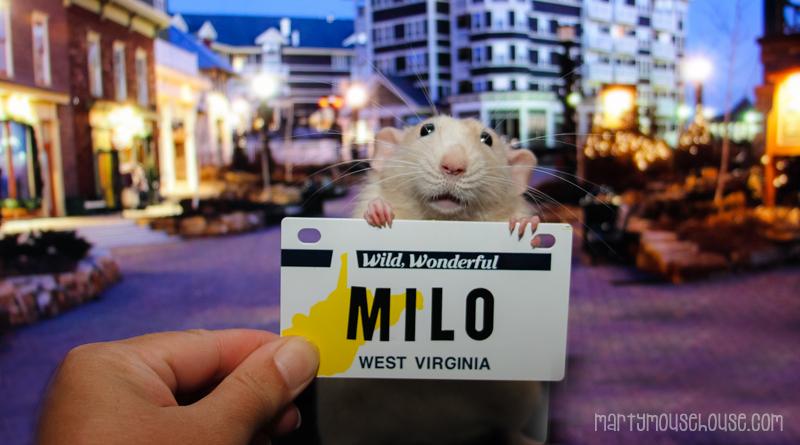 WV_milo