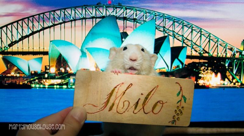milo_australia