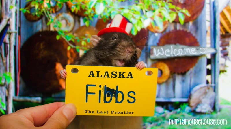 Fibbs_AK