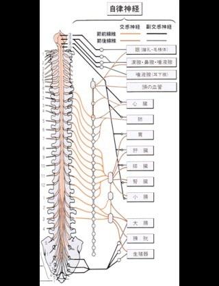 自律神経支配