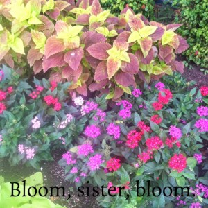bloom marvia davidson