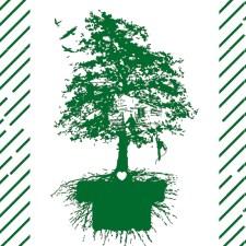 Hambi bleibt: Warum der Hambacher Forst mehr als ein Stück Wald ist