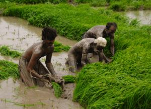 misery of farmers in pakistan