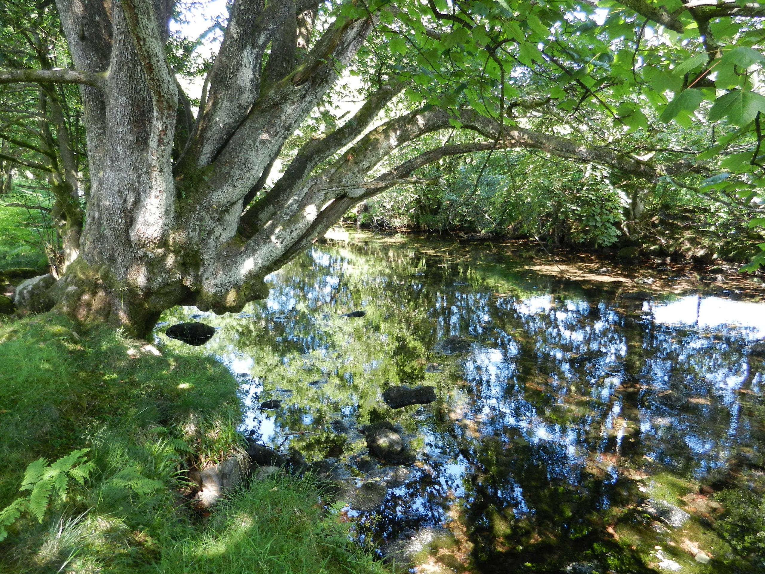 Peaceful stream, Lake District