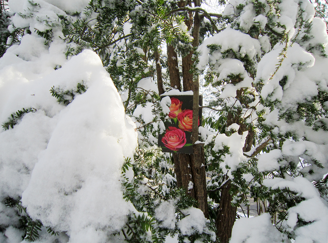 ChromaLuxe exterior grade aluminum metal prints hanging in the garden all winter in the snow. Mary Ahern Artist