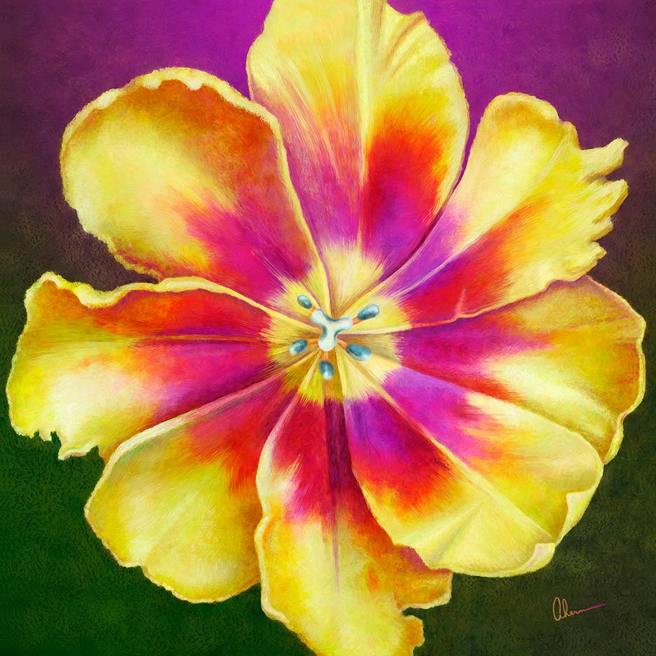 Yellow Tulip Squared