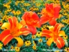 Daylilies & Rudbeckia - Mixed Media Painting - Mary Ahern